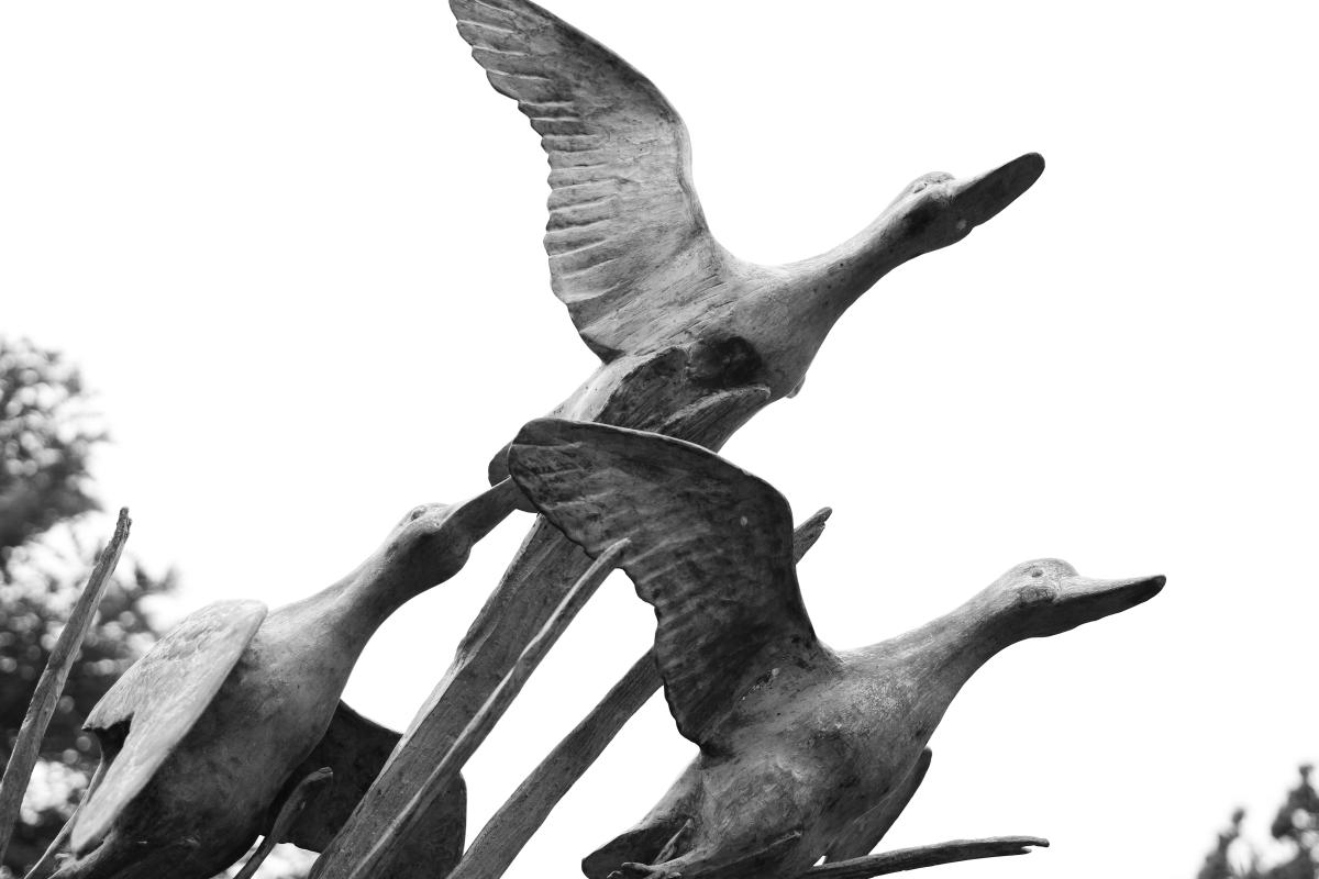 1st Place Winner in the Black & White Category - In Flight taken at Fourth Generation Nursery by Stephanie Marcott